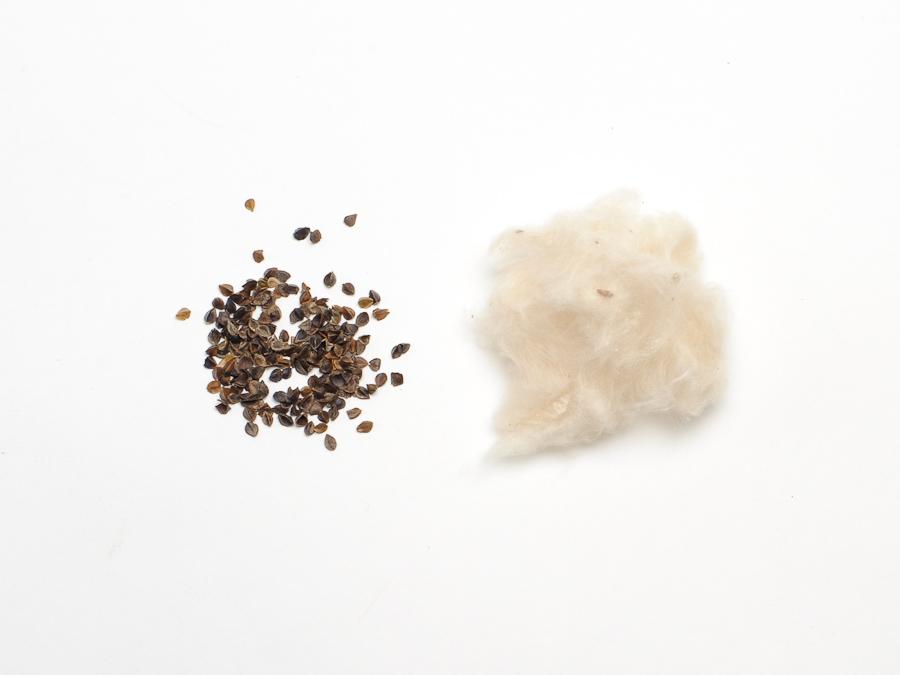 Dharma Desk - kapok-buckwheat